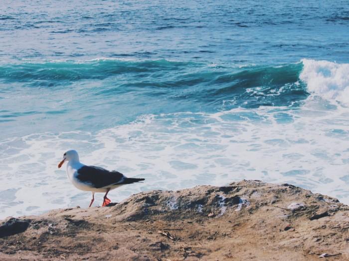 La Jolla seals (10)